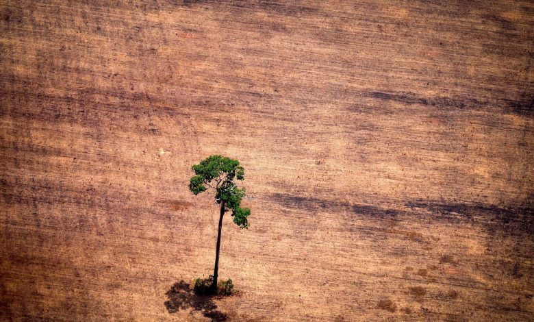 How To Tackle Deforestation? Give Indigenous People Their Land Rights.
