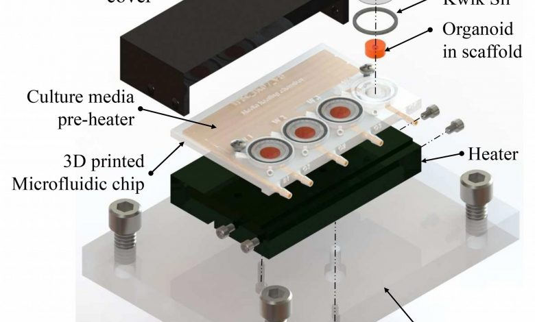 Scientists Grow Tiny Brains in 3D-Printed Bioreactor