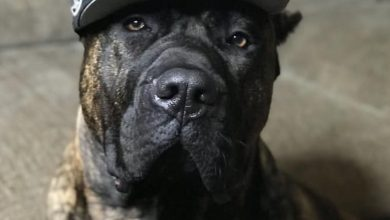 Teams took to social media to share their furry friends in honor of National Pet Day