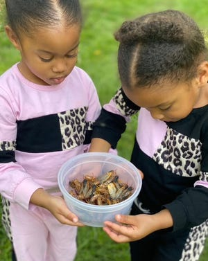 Four-year-old twins, Meena and Nyla Claytor-Howard, collect and observe a group of cicadas near their grandmother's home in Burke, Virginia.