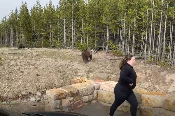 She appeared to disobey a park guideline requiring bears to be kept at least 100 yards away.