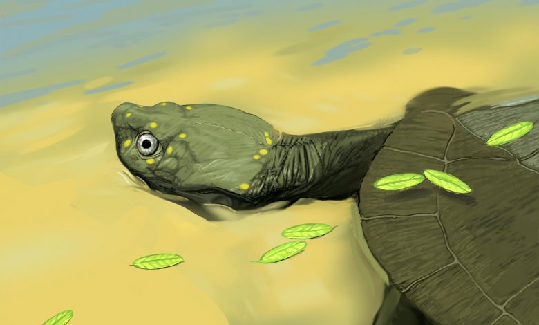96 Million-Year-Old Fossil Is Earliest Evidence of Sidenecked Turtles in North America