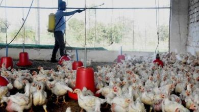 Bird flu detected at poultry farm in Punjab's Ludhiana