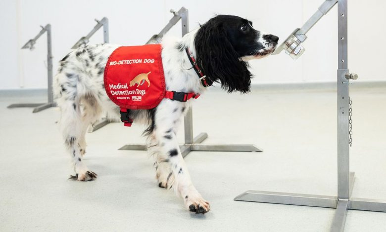 Dogs can sniff out 90% of COVID-19 cases, even if they're asymptomatic