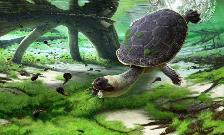 New Turtle Discovered From the Late Cretaceous of Madagascar