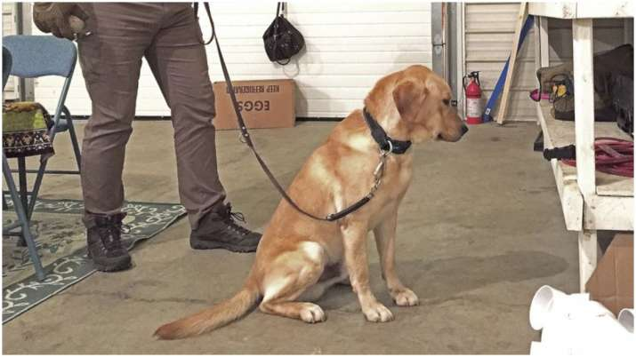 New UK study indicates trained dogs could sniff out COVID-19 infections