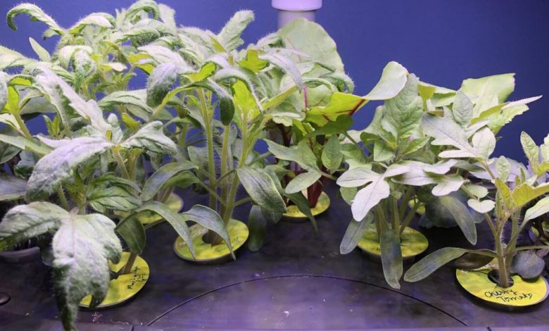 Review: AeroGarden's Bounty Elite makes growing vegetables and herbs a cinch