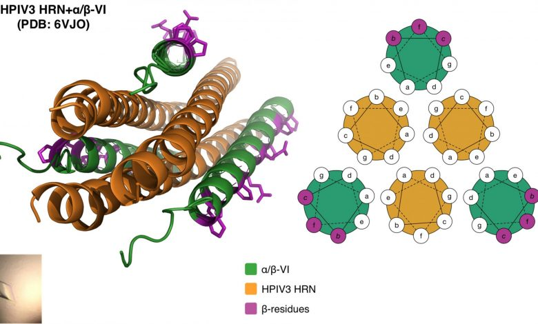 Scientists Engineer a Better Way to Block Viruses That Cause Childhood Respiratory Infections