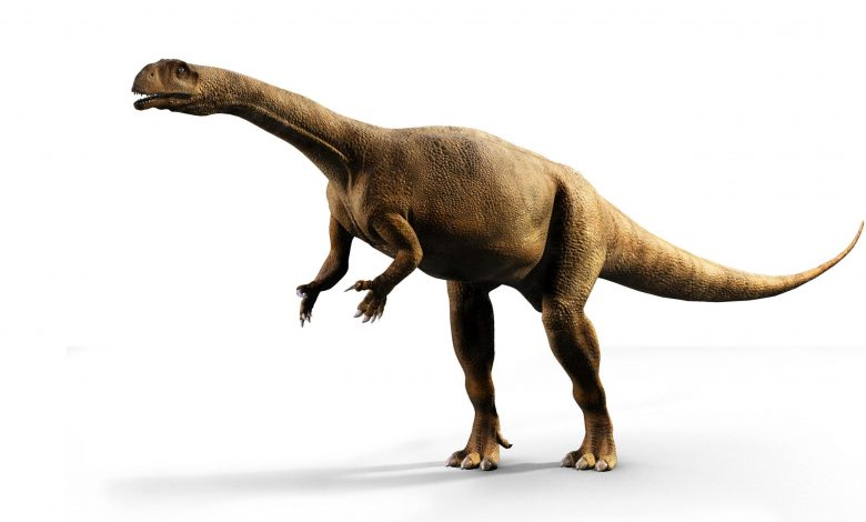 Southern African Dinosaur Had Extremely Irregular Growth