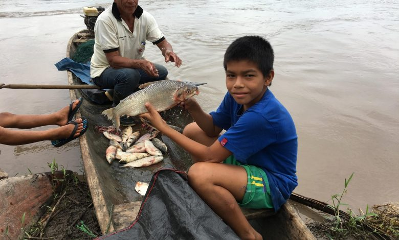 Threat of Major Human Nutritional Shortages From Declining Biodiversity in Wild Amazon Fisheries