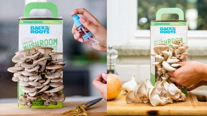 Best Father's Day Gifts: Mushroom Growing Kit