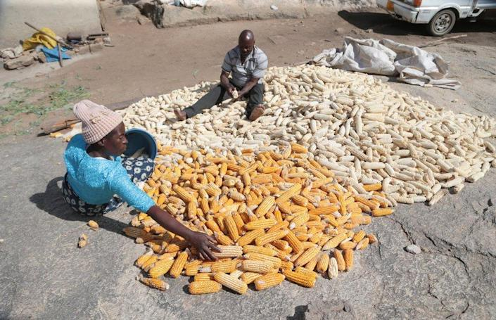 A woman and a man sit on pile of picked maize.