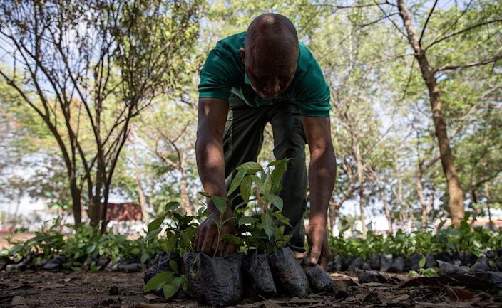 A man counting seedlings