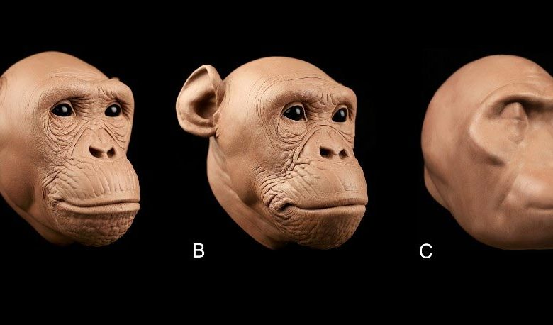 Ancient Hominid Soft Tissue Approximations