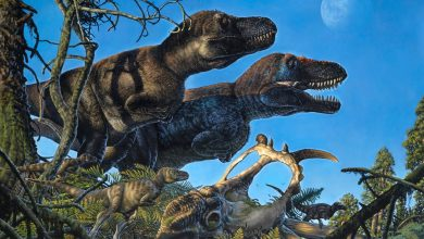 Were Dinosaurs Warm-Blooded? Research Team Discovers Arctic Dinosaur Nursery