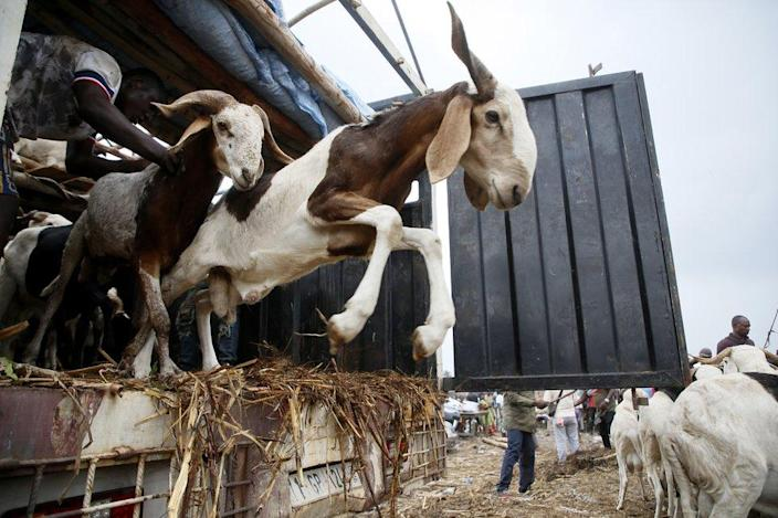 Livestock are offloaded at a market.