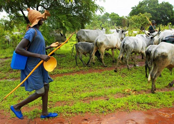 A Fulani herder with his cattle