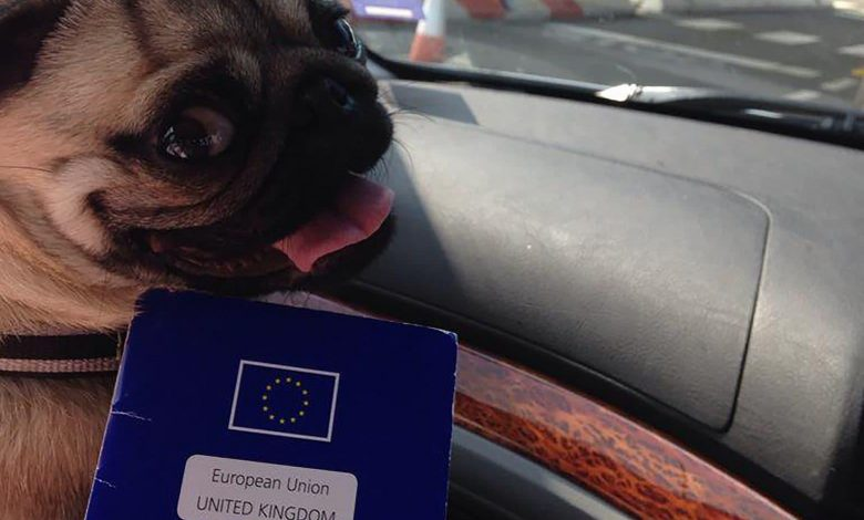 Make your dog French to avoid EU red tape, vets urge owners