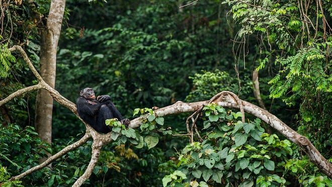 Amazon rainforest releases more CO2 than it absorbs: climate change