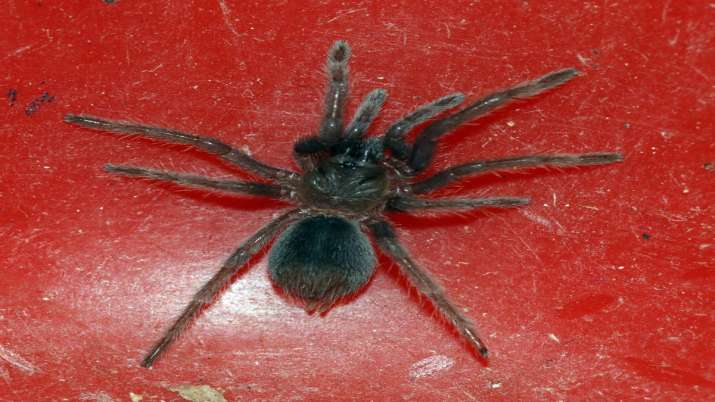 Customs seizes parcel with 107 live spiders at Chennai