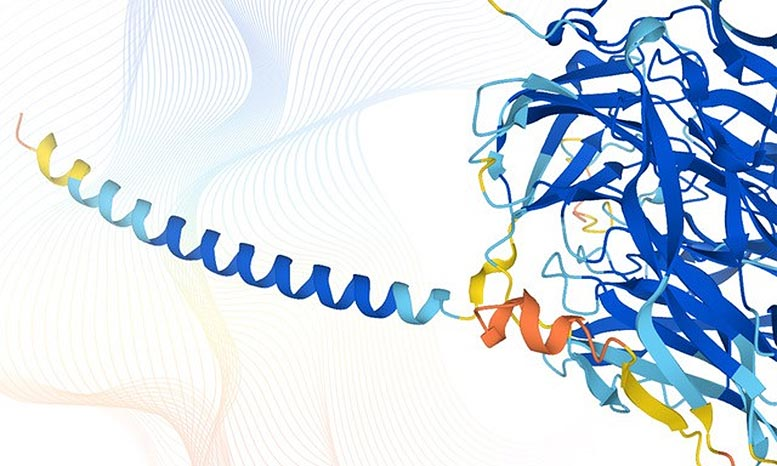 AlphaFold Protein Structures