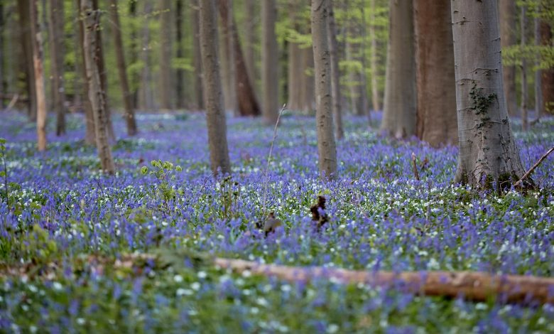 EU to protect and restore forests