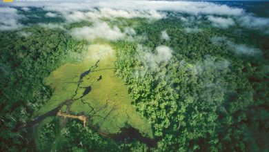 """Helping Avoid a """"Tipping Point"""" – New Way To Measure Tropical Forest Vulnerability"""