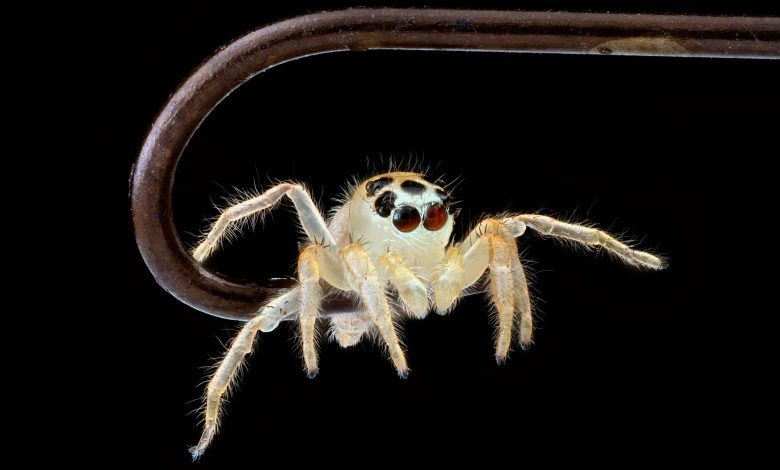 How Spiders Can Distinguish Living From Non-Living Objects in Their Peripheral Vision