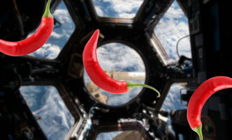 NASA is growing space chile peppers on the ISS -- and astronauts will taste them