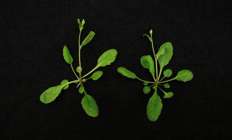 New CRISPR/Cas9 Plant Genetics Technology to Improve Agricultural Yield and Resist the Effects of Climate Change