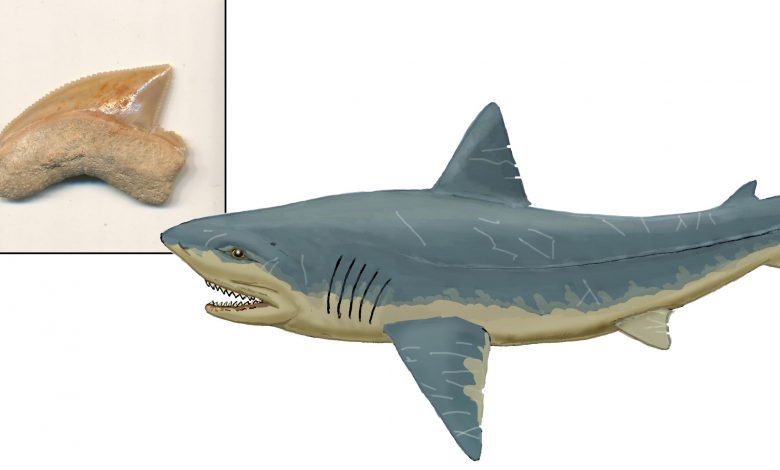 The City of David and the 80 Million-Year-Old Sharks' Teeth Mystery
