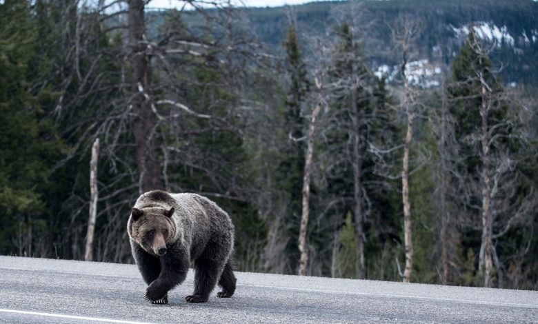 Victim of grizzly bear attack in Montana identified.