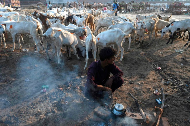 A farmer prepares tea in front of his goat stall at a cattle market set to buy sacrificial animals ahead of Eid al-Adha Muslim festival or the 'Festival of sacrifice' in Lahore on July 26, 2020.  Eid al-Adha, feast of the sacrifice, marks the end of the Hajj pilgrimage to Mecca and commemorates Prophet Abraham's readiness to sacrifice his son to show obedience to Allah.