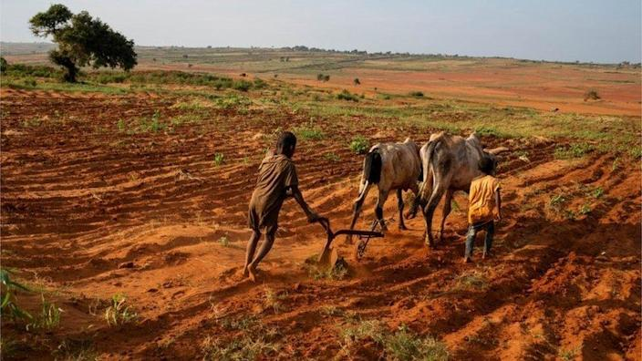 Children attempt to plough a plantation using cattle in Grand Sud of Betsimeda, Maroalomainty commune, Ambovombe District, Madagascar May 2, 2021