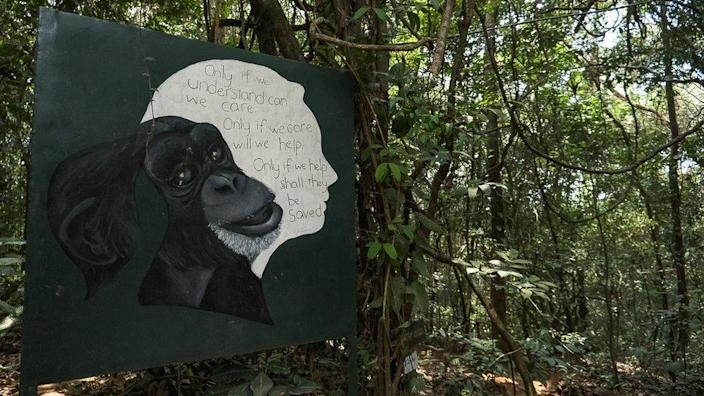 A sign showing a quote and image of Dr. Jane Goodall, British primatologist at the Tacugama Chimpanzee sanctuary