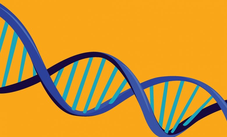 Ancestry vs. 23 and Me: Which DNA testing kit is best for tracing your family's roots?