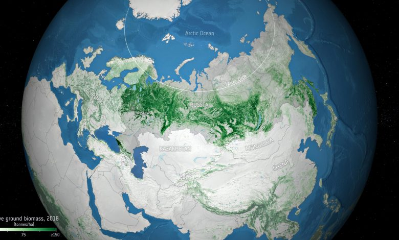Russia's Forests Store More Carbon Than Previously Thought – Estimated 3.9 Trillion Cubic Feet of Wood