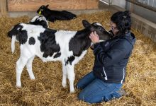 U.S. Dairy Industry Advances Three Game-Changing Solutions to Deliver a More Sustainable and Secure Food System