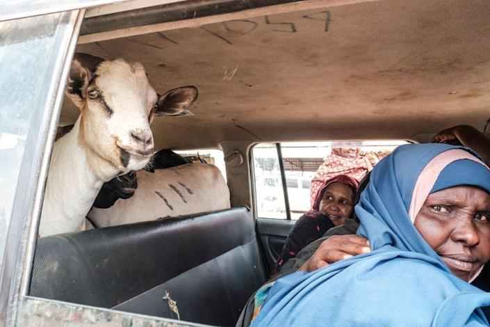 Women sit next to goats inside a car during a livestock market in the city of Hargeisa, Somaliland.