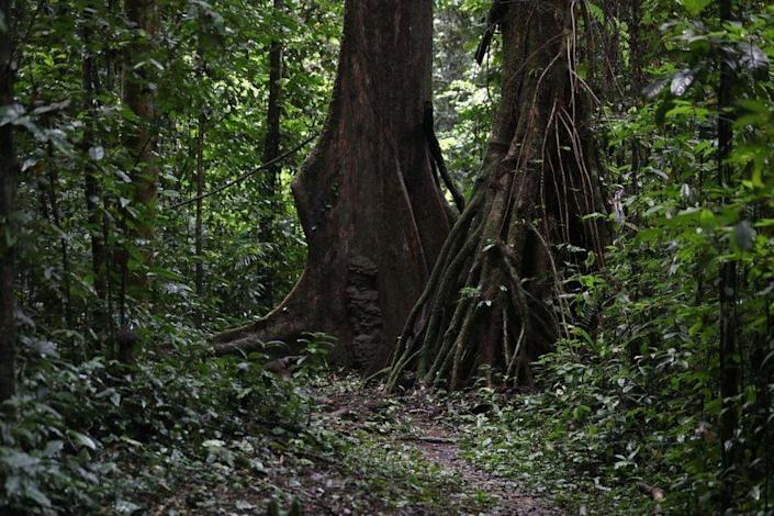 A shot of trees and foliage in Oban Biosphere Reserve, in Calabar, Nigeria.