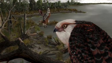 Fossil of fearsome eagle from 25 million years ago found in stunning condition