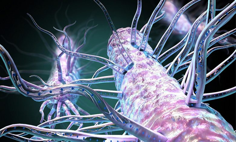 """Hidden Bacterial Hairs Power Nature's """"Electric Grid"""" – A Global Web of Bacteria-Generated Nanowires"""