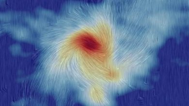 Interplay Between Magnetic Force and Gravity in Massive Star Formation