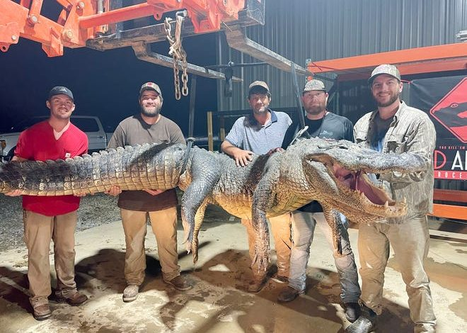 (From left) Eli Frierson of Starkville, Adam Steen of Ethel, Bubba Steen of Ethel, Kent Britton of Poplar Creek, and Ty Powell of Columbia are photographed with a 787-pound alligator they caught in the Yazoo River on Aug. 29, 2021.