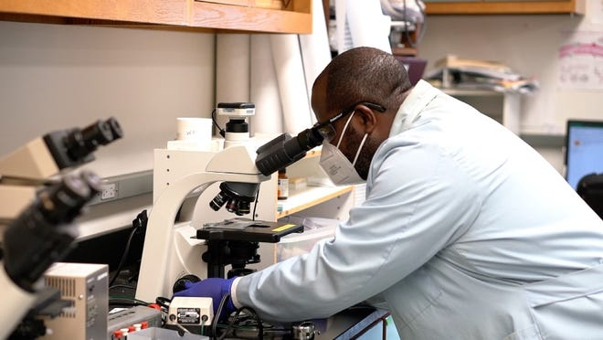 Joseph Larkin III, a senior author of the study and an associate professor in the UF/IFAS department of microbiology and cell science, peers into a microscope. (Image courtesy of University of Florida/IFAS)