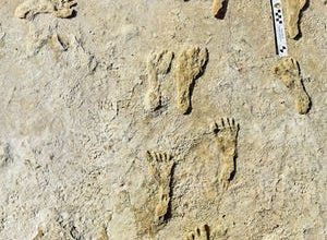 Human fossilized footprints, up to 23,000 years old based on carbon dating, at White Sands National Park in southern New Mexico