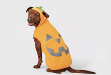 Save 40% on Halloween costumes for pets and kids today