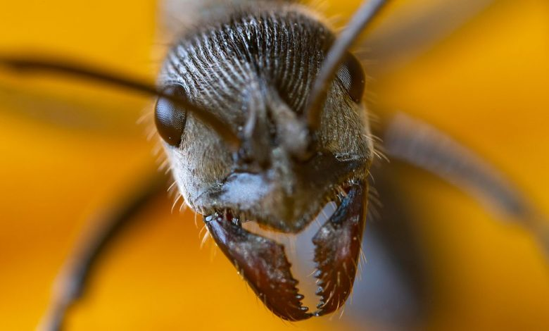 Scientists reveal the secrets behind ant teeth super strength