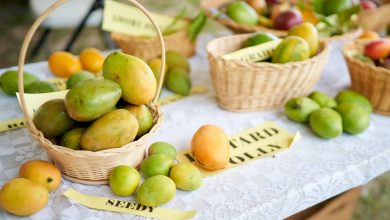 Venture capital firm Greylock gears up for mango seeds