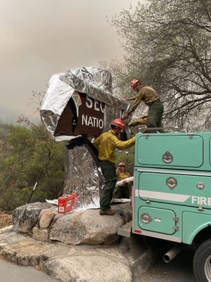 A grove of ancient sequoias, including the 275-foot (83-meter) General Sherman Tree -- the largest in the world -- were getting aluminum cladding to fend off the flames.  Firefighters were also clearing brush and pre-positioning engines among the 2,000 ancient trees in California's Sequoia National Park, incident commanders said.